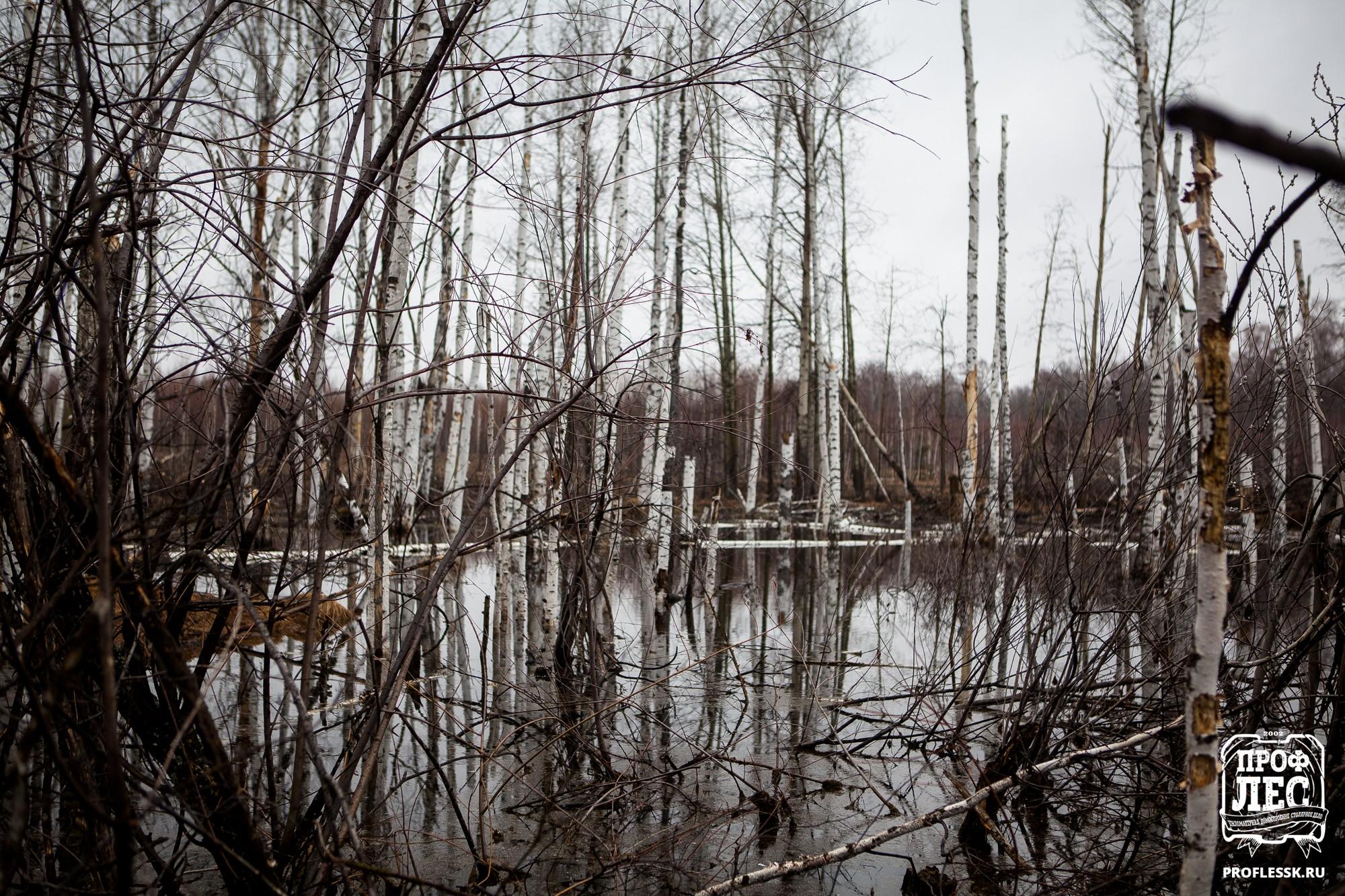 - ПРОФЛЕС - Томск - Деревянное домостроение 048